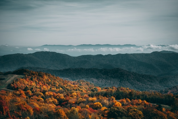 Wysoki kąt strzału kolorowy jesień las pod ponurym niebem