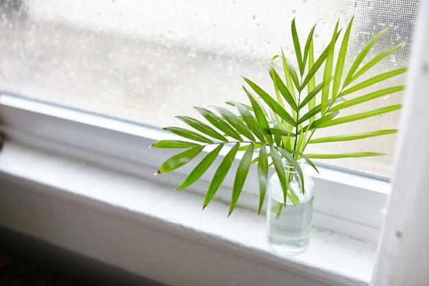 Wysoki kąt strzału liści rośliny doniczkowej w butelce z wodą w pobliżu okna