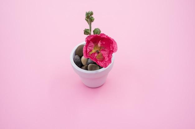 Wysoki kąt strzału różowego kwiatu goździka w małej doniczce, umieszczony na różowej powierzchni