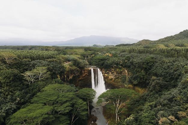 Wysoki kąt strzału wodospadów w lesie