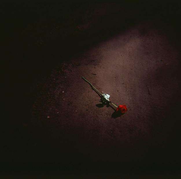 Wysoki kąt strzału z czerwoną różą na ziemi w nocy