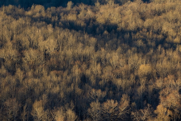 Wysoki kąt strzału z dużego lasu suchych drzew na istrii w chorwacji