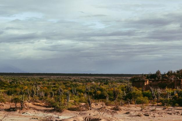 Wysoki kąt ujęcia egzotycznych dzikich roślin rosnących wśród skał na pustyni tatacoa w kolumbii