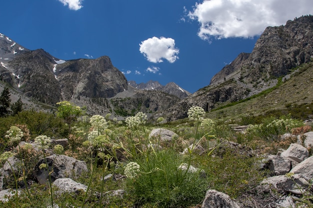 Wysoki kąt ujęcia naturalnego obszaru w pobliżu lodowca palisades w big pine lakes w kalifornii
