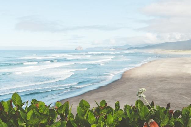 Wysoki kąt ujęcia roślin rosnących na brzegu morza pod jasnym niebem