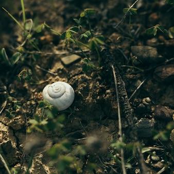 Wysoki kąt widzenia białego ślimaka na skale