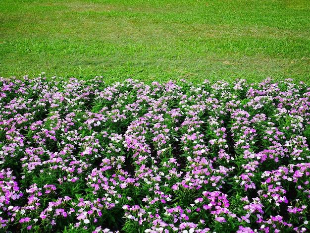 Wysoki kąt widzenia różowych kwiatów w polu zielonej trawy