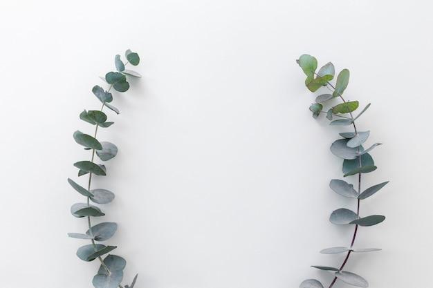 Wysoki kąt widzenia zielonych liści ułożone na białym tle