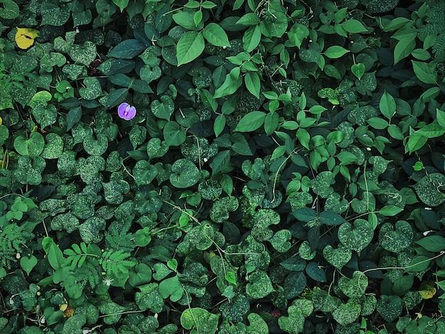 Wysoki kąt widzenia zielonych roślin i małych fioletowych kwiatów