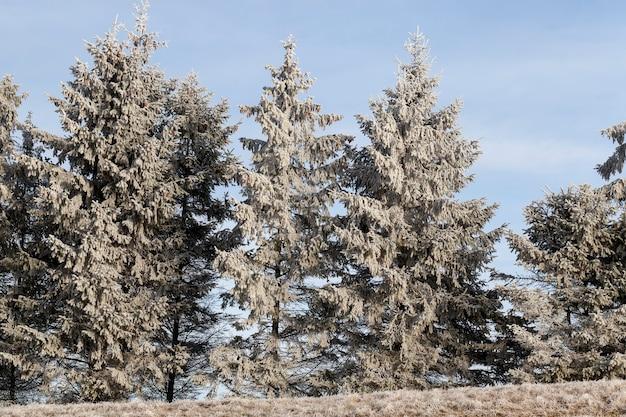 Wysoki w zimie mróz w zimowych porach roku, krajobraz