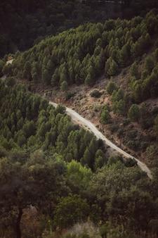 Wysoki widok na leśną drogę między naturalnym krajobrazem
