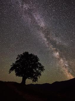 Wysokie drzewo pod rozgwieżdżonym nocnym niebem