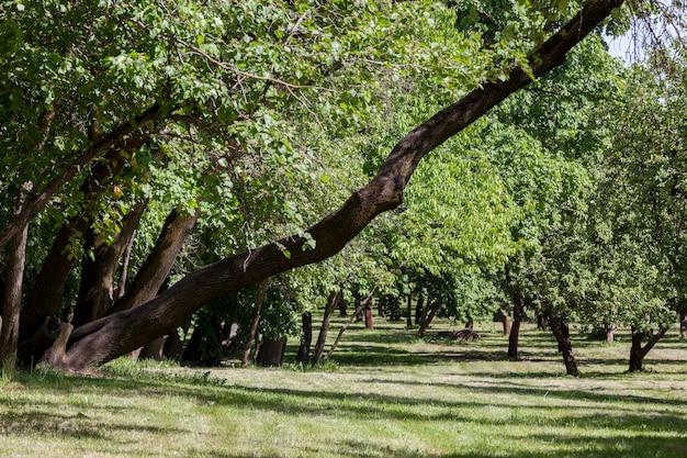 Wysokie i niskie drzewa z zielonymi liśćmi, letni park miejski