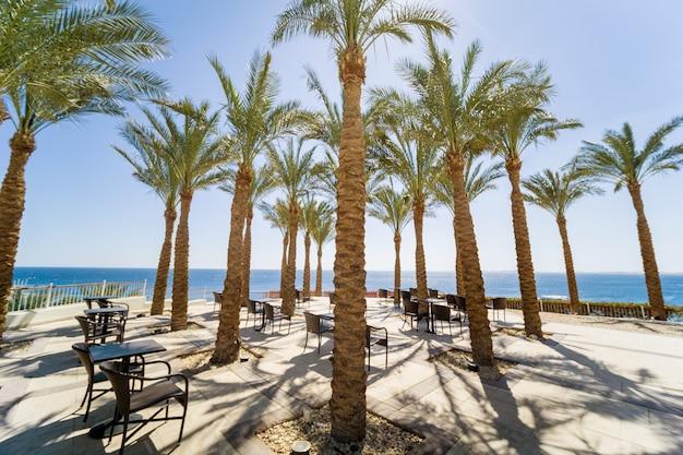 Wysokie palmy na tarasie w pobliżu morza na tle błękitnego nieba