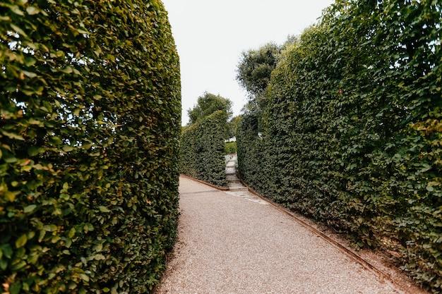 Wysokie zielone ściany krzewów wokół ścieżki spacerowej w parku.