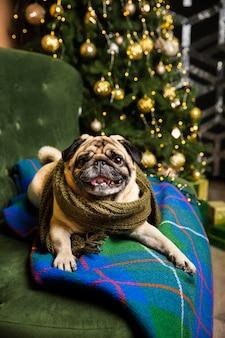 Wysokiego kąta psi jest ubranym szalika widok