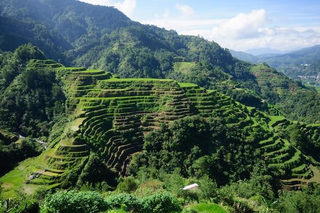 Wysokiego kąta strzał piękny krajobraz w banaue ryżowych tarasach, ifugao prowincja, filipiny