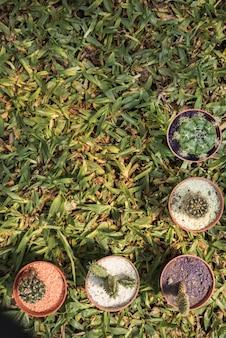 Wysokiego kąta widok doniczkowe rośliny z różnorodnymi tłustoszowatymi roślinami na zielonej trawy tle