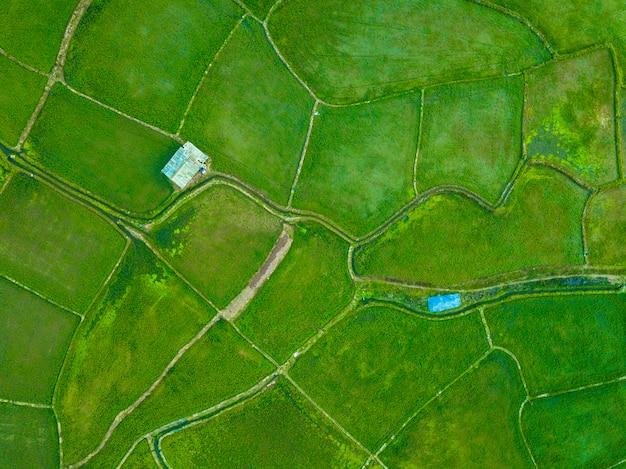 Wysokiego kąta widok ryżowi pola w wiejskim tajlandia