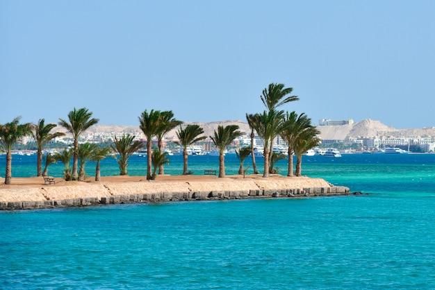 Wyspa z palmami na morzu czerwonym w egipcie.