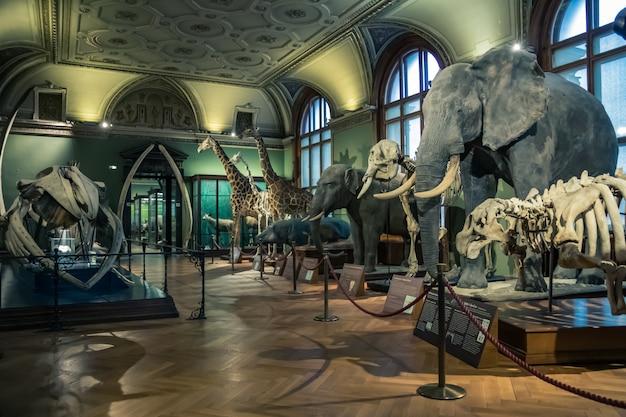 Wystawa zwierząt w muzeum nauki