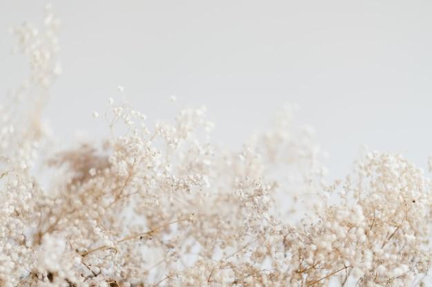 Wystrój w kwiatowy wzór. suszona kompozycja liści. skopiuj miejsce na tle kości słoniowej.