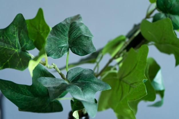 Wystrój wnętrza. plastikowy kwiat w butelce. zielone liście. zwiędłe kwiaty.