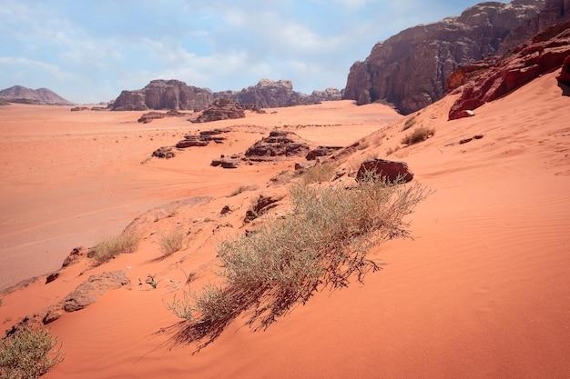 Wysusz cierń na czerwonej pustyni ze skałami wadi rum w jordanii w ciągu dnia w gorącym słońcu
