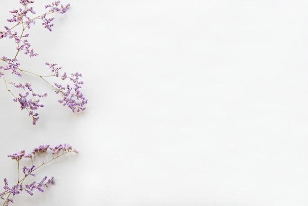 Wysuszeni kwiaty na białym tle