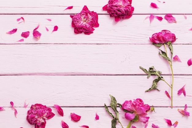 Wysuszeni kwiaty na różowej drewnianej ścianie