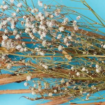 Wysuszona bawełna rozgałęzia się na błękitnym tle
