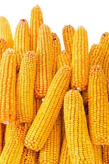 Wysuszona kukurudza na cob na białym tle