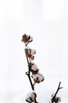 Wysuszona piękna biała puszysta bawełna na białym drewnianym tle