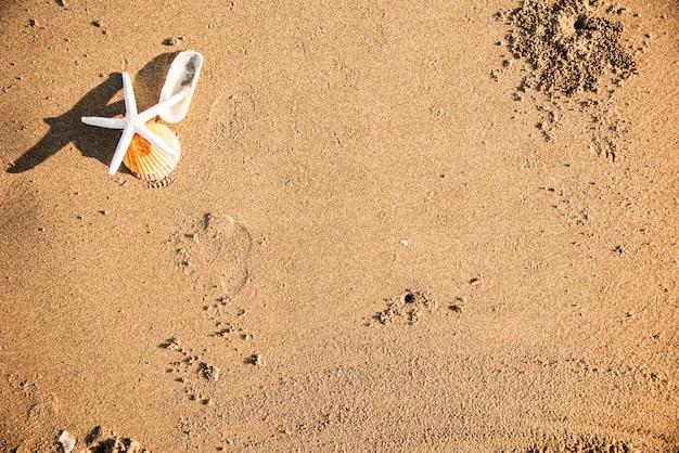 Wysuszona rozgwiazda na plażowym tle