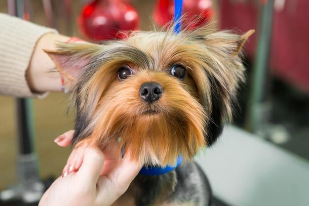 Wysuszyć psa w salonie fryzjerskim po kąpieli