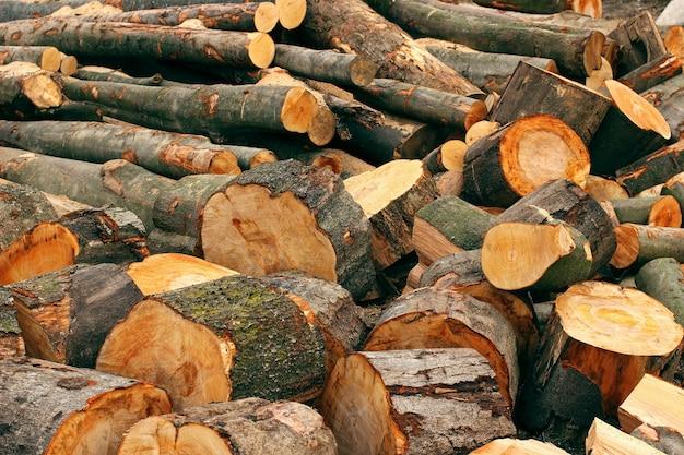 Wytnij drewno na drewno opałowe