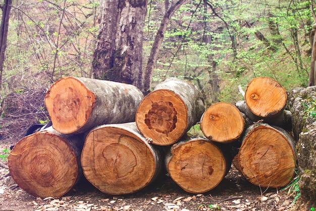 Wytnij kłody drzew ułożone w stos w lesie