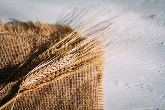 Wytnij kłosy pszenicy leżące na płótnie