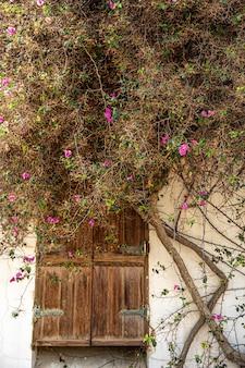 Wzdłuż ściany elewacji domu z drewnianymi drzwiami wije się stare drzewo kwitnące na sucho