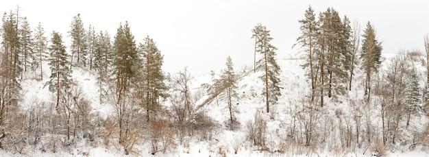 Wzgórza Przybrzeżne Z Rzadkimi Lasami Iglastymi I Liściastymi Premium Zdjęcia
