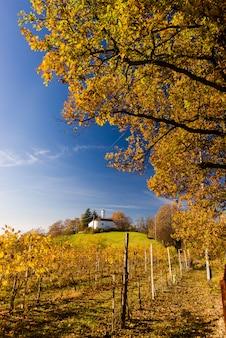 Wzgórza winnic jesienią