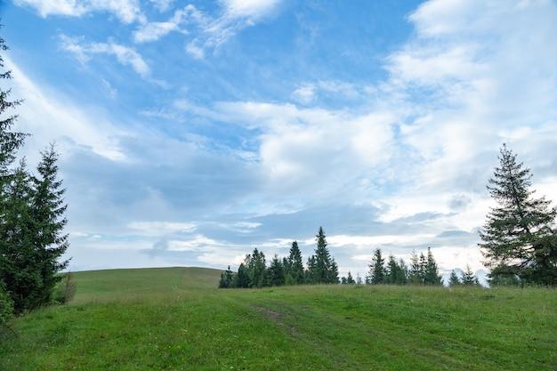 Wzgórza z zieloną trawą i jodłami latem na tle błękitnego nieba i białych chmur.