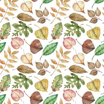 Wzór akwarela kolorowe jesienne liście