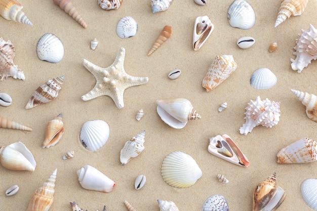 Wzór kompozycji muszelek na piasku na plaży