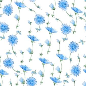 Wzór kwiatów cykorii