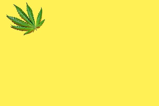Wzór liści konopi na żółtym tle z ostrym światłem. minimalistyczny plakat konopny z miejscem na tekst