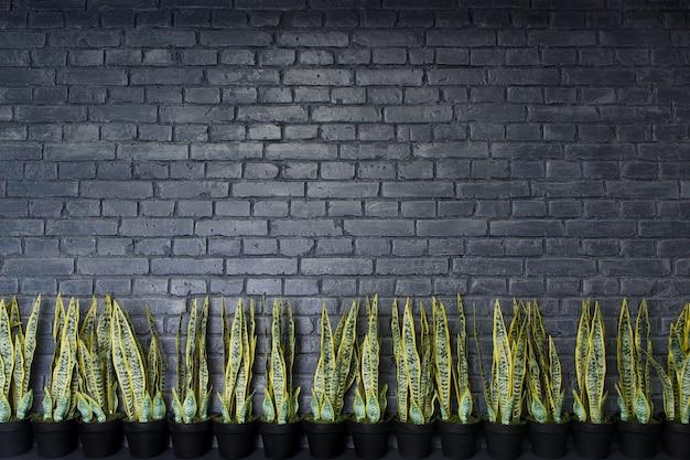 Wzór naturalnego ceglanego muru i sztucznej rośliny kwiatowej sansevieria. naturalne tło.