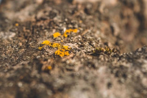 Wzór porostu mchu i grzyba rosnącego na korze drzewa w lesie
