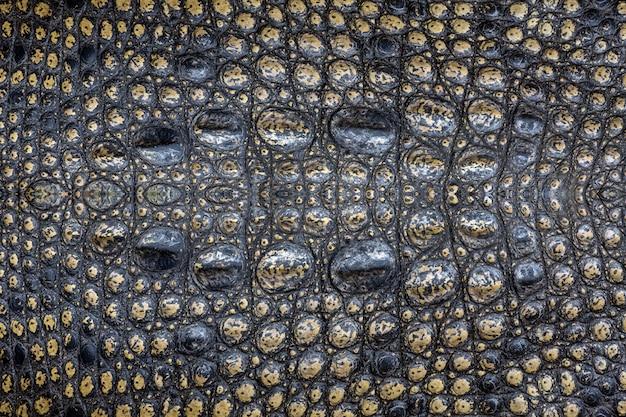 Wzór powierzchni skóry krokodyla na tle.