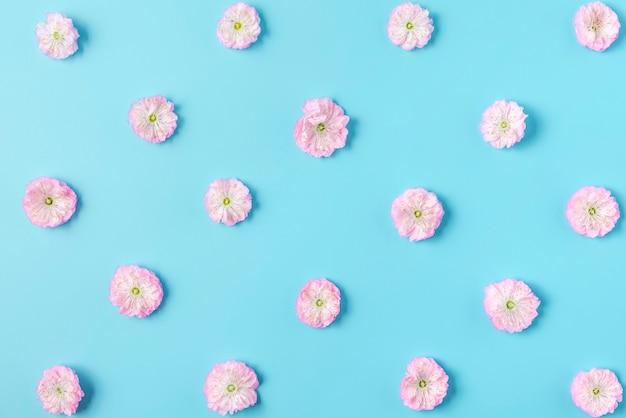 Wzór różowe kwiaty kwitnących wiśni na niebieskim tle. leżał na płasko. widok z góry. walentynki-dzień tło. kwiatowy wzór
